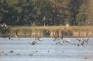 OTOP - Europejskie Dni Ptaków - Jeziorsko 06.10.2018