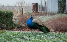 OTOP - Obrączkowanie ptaków